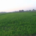 Daska_Fields_View_1