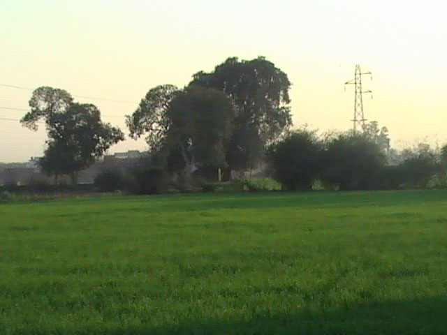 Daska_Fields_View_2